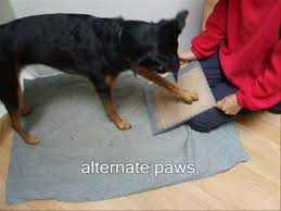 is your dog scared of having his toes