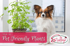 top 10 pet friendly plants studley s