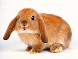 free cute rabbit wallpapers