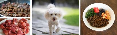 ts for dogs with bladder stones