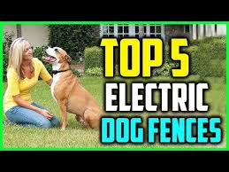 Top 5 Best Electric Dog Fences In 2018 Youtube