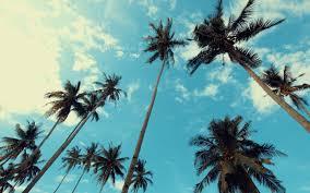 تحميل خلفيات أشجار النخيل العالية جزيرة استوائية مساء أشجار