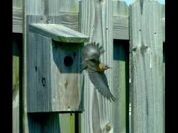 How To Build An Inexpensive Eastern Bluebird House Youtube