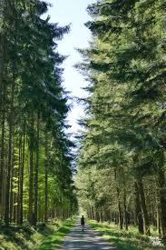 un week end en forêt de saint hubert