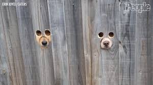 Dogs Stick Their Face Through Funny Holes In Fence People Com
