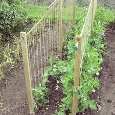 Homemade Pea Supports Www Lavenderandleeks Co Uk Allotment Gardening Fall Garden Vegetables Garden Trellis