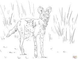 Afrikaanse Wilde Hond Of Sierwolf Kleurplaat Gratis Kleurplaten