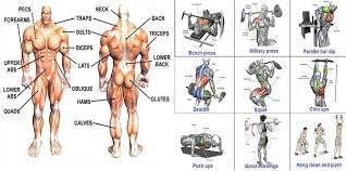 best bodybuilding workout for serious