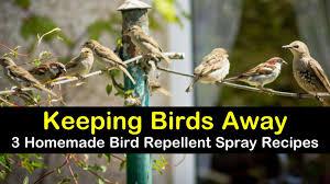 Keeping Birds Away 3 Homemade Bird Repellent Spray Recipes