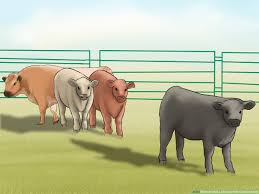 How To Make A Fence With Cattle Panels 6 Steps With Pictures