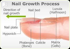 brittle nails symptom information