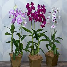 orchids by the month white flower farm