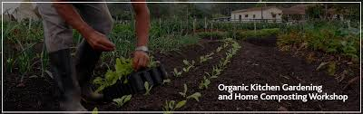 organic kitchen gardening and home