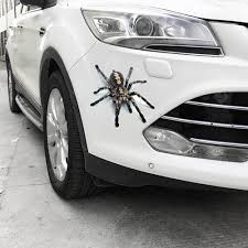 Three Dimensional Spider Gecko Car Sticker Sale Price Reviews Gearbest