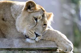 صور حيوانات تبكي تشعر الحيوانات بالحرن صور حزينه