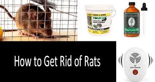get rid of rats in your house and yard