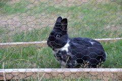 Pet Bunny Behind A Mesh Fence In The Garden Stock Photo Image Of Green Rabbit 122595374