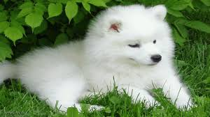 best 57 puppy backgrounds for puter