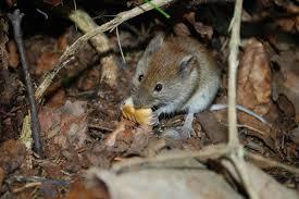 صور لـ جذاب يتناول الطعام الفأر جوعان الفئران