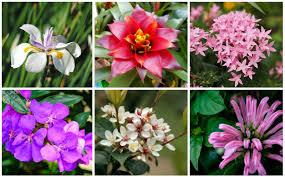 25 perfect florida shade plants