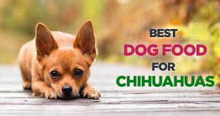best dog food for chihuahuas choosing