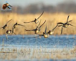 duck hunting wallpapers top free duck