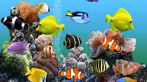 aquarium wallpaper 72 images