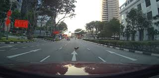 boar and now ens crossing the road