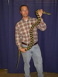 jungle carpet python facts and pictures