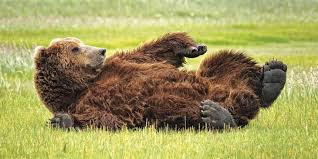 Why Bears? - BearSmart.com