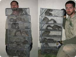 squirrel traps in action catching squirels