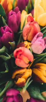 خلفيات أزهار عالية الجودة جاهزة للتحميل بنقرة واحدة