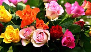 صور لـ ورود زهور زاهى الألوان اللون إزهار زهر حديقة