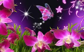صور فراشات جميلة وزهور رقيقة خلفيات رومانسية من الطبيعة اجمل الصور