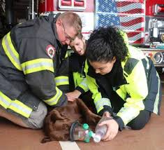 Donation Of Oxygen Masks By Canine Company Makes Bayonne Pets Safer Tapinto