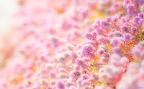 صور ورد خلفيات اجمل خلفيات ورود تبعث الجمال و الهدوء دلع ورد