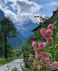 خلفيات ورد صور خلفيات ورد صور طبيعة مميزة وجميلة وفريدة جدا