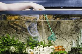 clean a fish tank in five easy steps