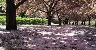 10 best botanical gardens for families