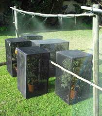 providing water for chameleons