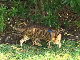 Indoor Vs Outdoor Cat Friendly Homes