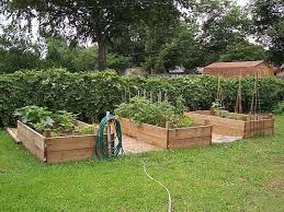 north central texas gardening plants