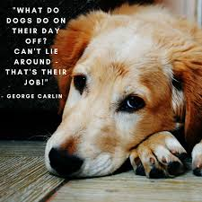 dog quote tuesday lazy day quotes paw palz