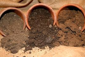 what can be grown in loamy sand home