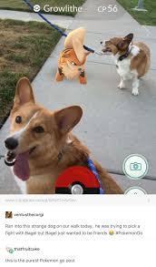 Pokemon go | Meme, Động vật, Hài hước