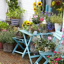 patio plants for container gardens