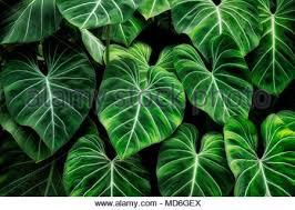 tropical leaves princeville botanical