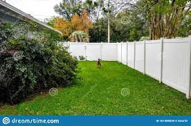 Dog Fence Yard Play Fun Green Florida Trees What Look Cute Fun Stock Image Image Of What Trees 161589549