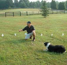 Underground Electric Dog Fence Installation In The Raleigh Nc