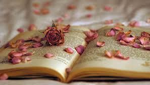 kata bijak bunga mawar berduri com